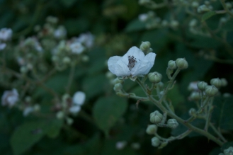 Moonshine flowers 1