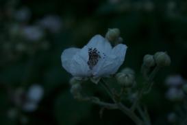 Moonshine flowers 2
